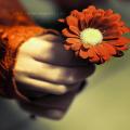 Lilian Flower