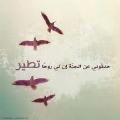 هبة وليد جادالله